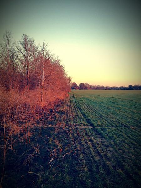 Winter Wheat Field - Leland, Mississippi