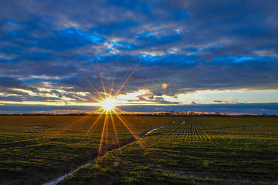 Cloudy sunset over a field of winter wheat - near Moorhead, Mississippi