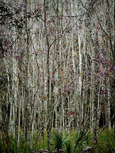 Flatwoods Park, Florida