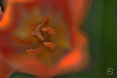 _DSC5069-Edit