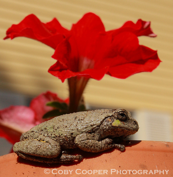 May 29, caught this little guy a few minutes ago catching some morning rays on the rim of our flower box...Shooting a balloon launch and light up tonight and looking forward to something different to shoot! Hope everyone has a great weekend!
