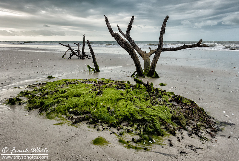 Driftwood and moss at Estero Lagoon, Ft Myers, FL