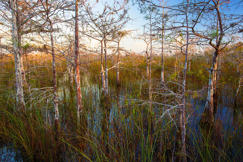 Florida, Everglades National Park,  Pa Hay Okee, Sunrise,佛罗里达,大沼泽地国家公园