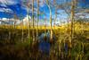 Florida, Everglades National Park,  Pa Hay Okee,佛罗里达,大沼泽地国家公园