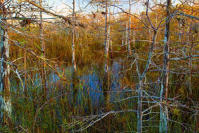 Florida, Everglades National Park,  Pa Hay Okee, Sunrise