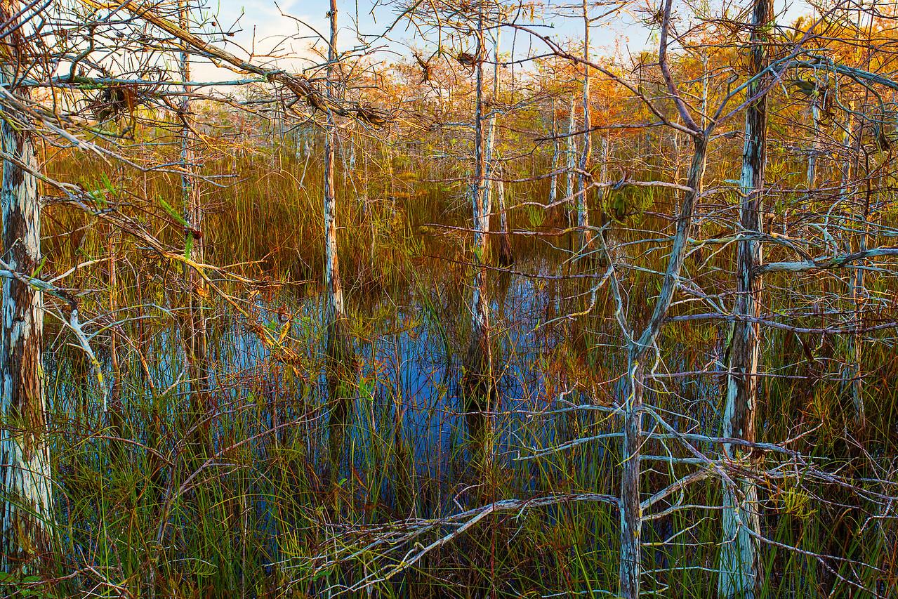 Florida, Everglades National Park,  Pa Hay Okee, Sunrise,佛罗里达,大沼泽地国家公园