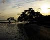 Lone Mangrove Long Key State Park at Dusk