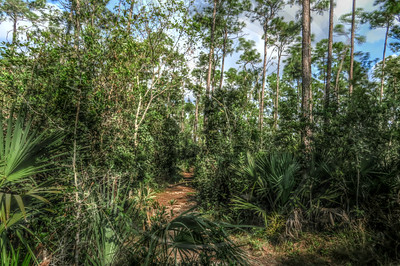 Everglades Upland