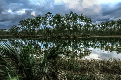 Everglades Dawn