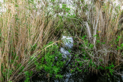 Subtropical Wetland