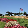 Lely entrance horses