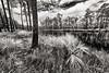 long-pine-key_DSC0782-Edit_pl