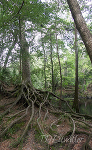 O'Leno State park