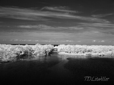 Robinson Preserve  Manatee County  Florida    Infrared   taken with an R72 filter