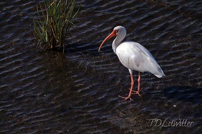 Robinson Preserve  Manatee County  Florida