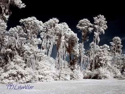 Rye Preserve, Manatee County FL