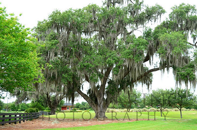 Sphagnum moss tree