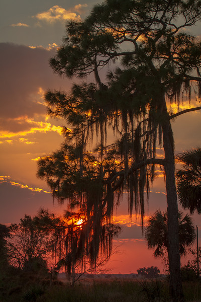 Sunset at Dinner Island.
