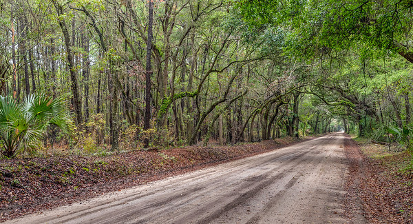 Tunnel of Trees, Botany Bay Road, Edisto Island, SC.