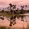 Orlando Wetlands.