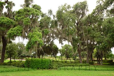 Sphagnum moss trees