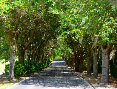 Welcoming tunnel of Sphagnum Moss Trees along Buena Vista Trail in The Villages, Florida