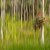 Bromeliad Blur