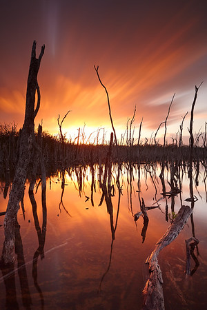 Sunrise over Dead Tree Alley