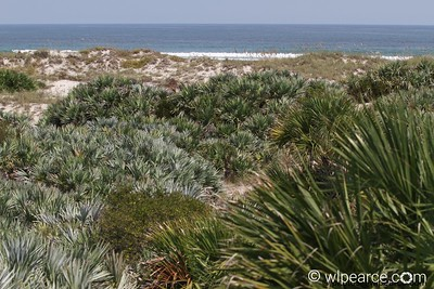 Old Florida Dunes Get notifications via: