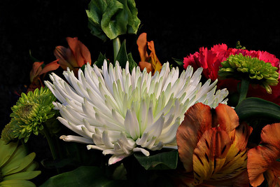 A group of flowers taken in studio
