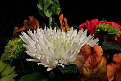 A group of flowers taken in studio