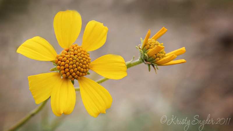 Always some yellow daisy flowers hanging around lake.  :)