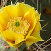 Cacuts wildflowers in bloom...   I got a few cactus spines stuck in my diffusion panel on this one..  then they stuck in my hand while I was pulling them out...   too funny!