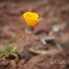 Wildflowers 2015