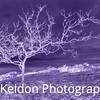 Ultraviolet Tree