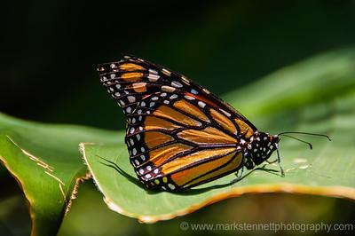 Butterfly Pavilion, Denver, CO