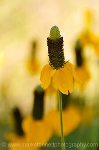 Wildflowers, Parker, Colorado