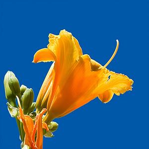 Orange4 Flower