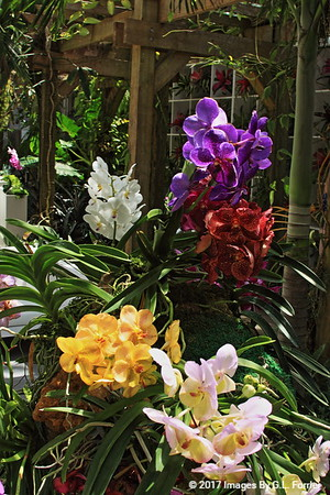 Summer of Orchid Colors