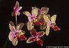 Orchids - Red on Yellow