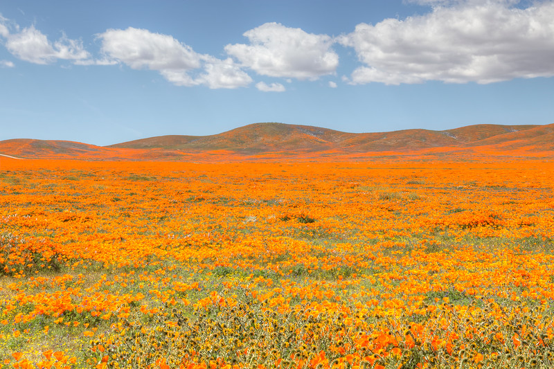 California Poppy Reserve - Last Look From Outside The Reserve