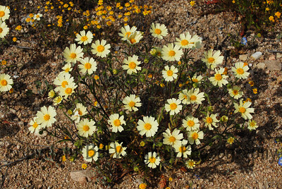 Spring Flowers near San Luis Obispo, Ca.