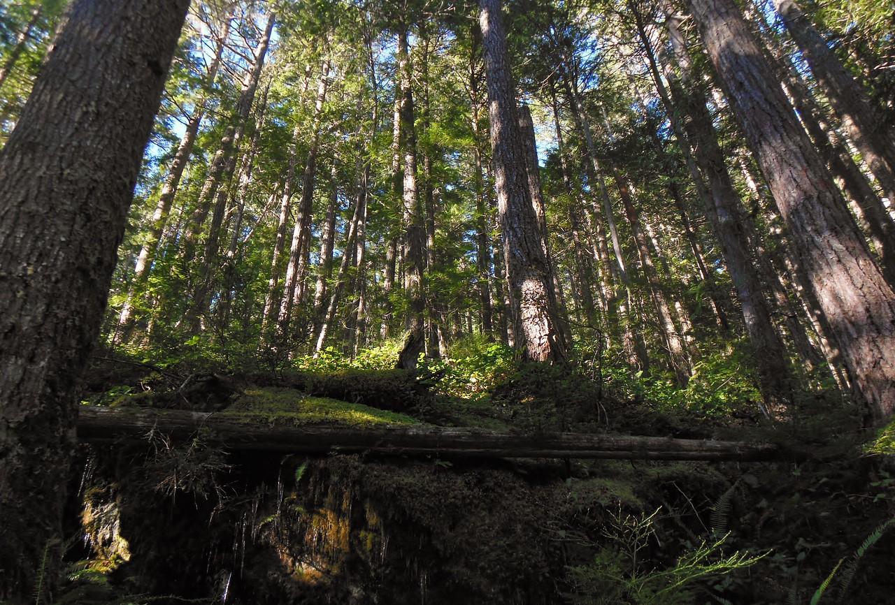 Icicles- Cape Horn , Washington