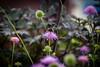 Bee & Flowers