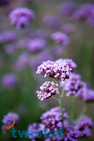 hdr-flower