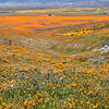 California Poppy Reserve - Looking Down and Beyond The Reserve