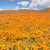 California Poppy Reserve - Gentle Hills