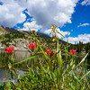 Paintbrushed Lake