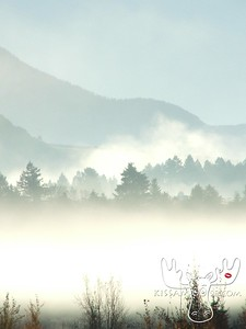 Swan Valley Idaho