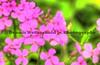 051217-FlowerHDR3